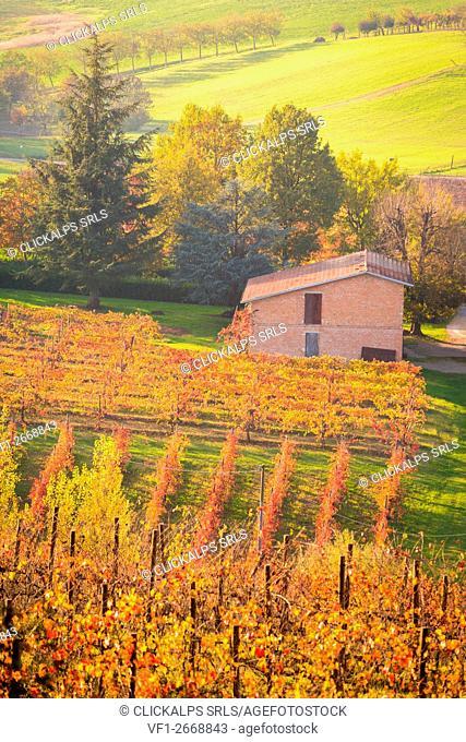 Castelvetro di Modena, Emilia Romagna, Italy. vineyards in Autumn