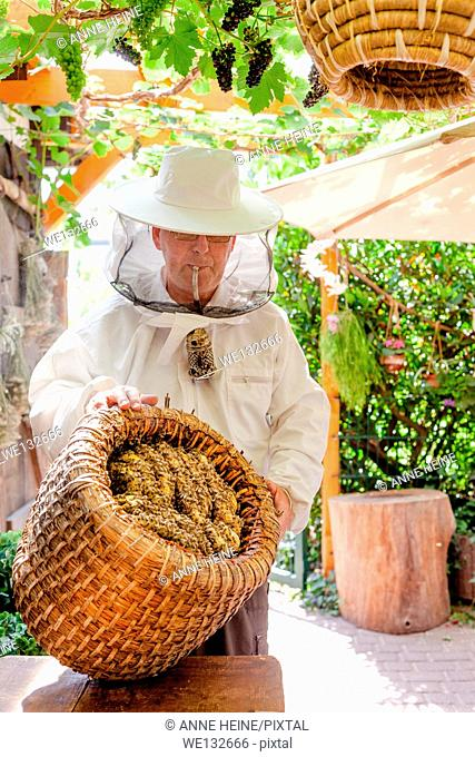 Hobby beekeeper holding a traditional straw hive with smoker in garden, showing honeycombs inside hive