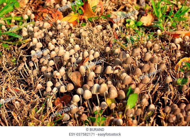 timber mushrooms as illustration autumn harvest