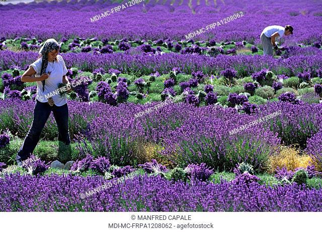 France - PACA - Alpes de Haute Provence