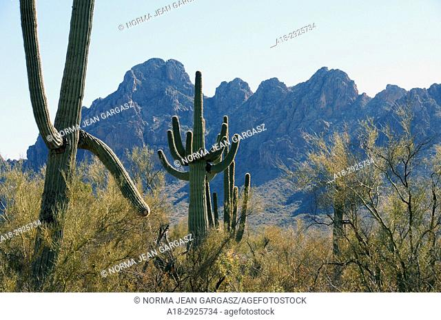 Ironwood Forest National Monument, Sonoran Desert, Marana, Arizona, USA