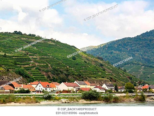 Pattern formed by rows of grape vines in vineyard
