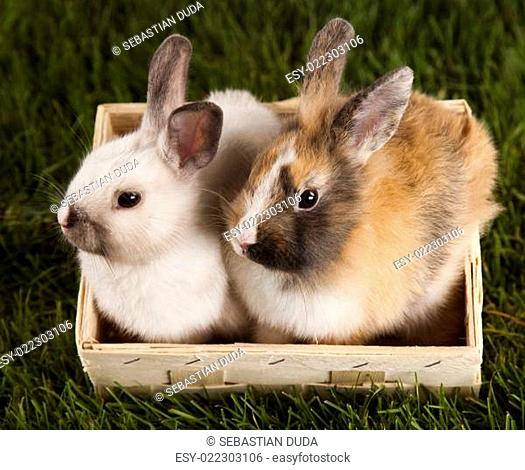 Bunny, rabbit and green grass