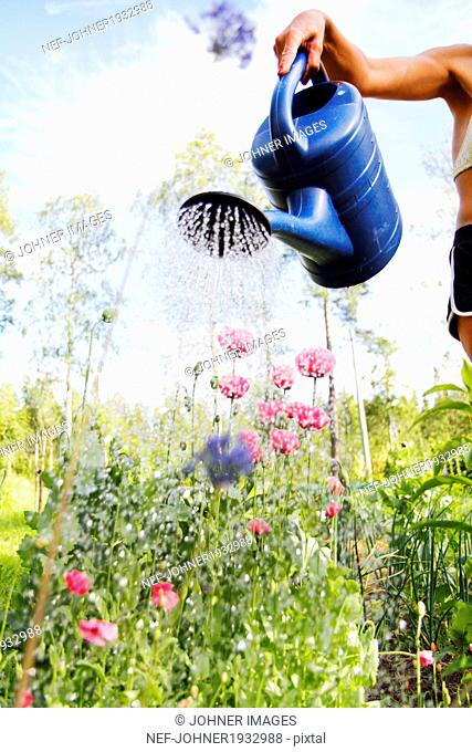 Woman watering flowers in garden, Norrbotten, Sweden