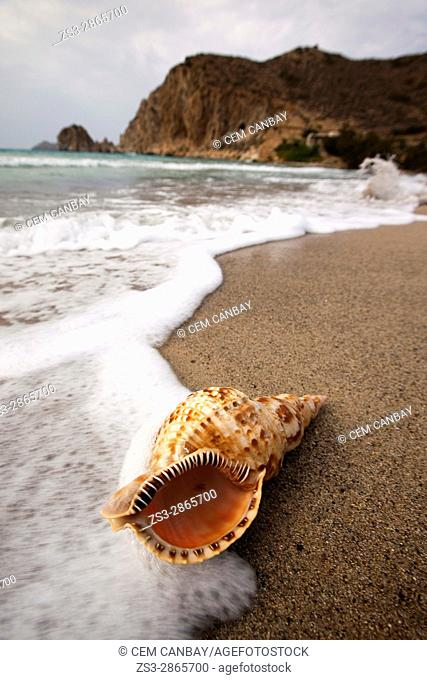 Seashell lying on the sand at Plathiena beach, Milos, Cyclades Islands, Greek Islands, Greece, Europe