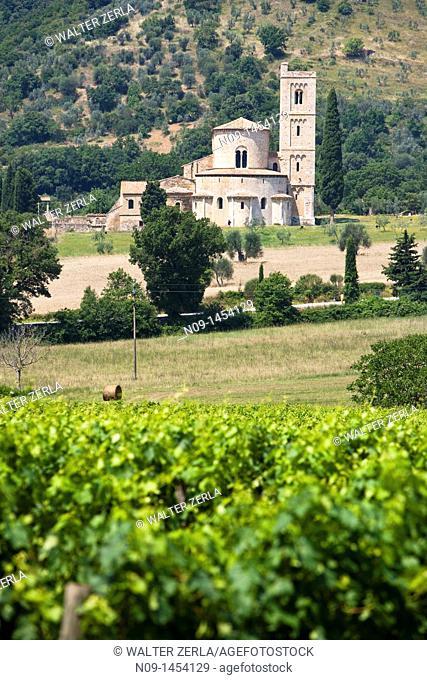 Vineyards, Castellabate, Salerno, Italy