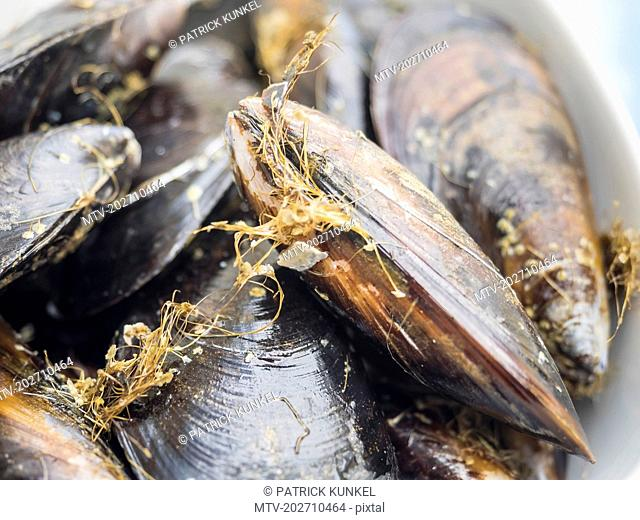 Close-up of fresh mussels