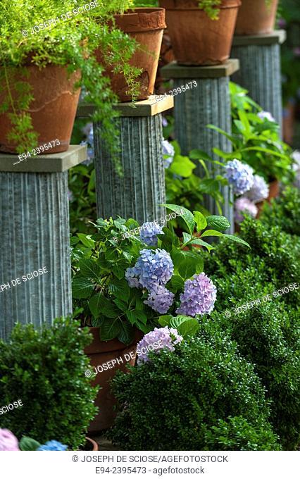 A garden vignette with boxwoods, hydrangeas and ferns in pots on pedestals.Georgia USA