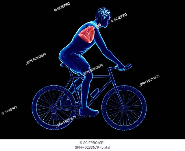 Illustration of a cyclist's lung