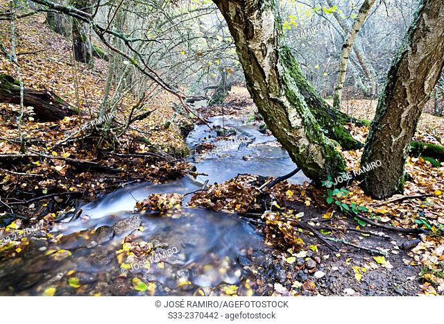 Dehesa stream in the Sierra Cebollera. Somosierra. Madrid. Spain. Europe