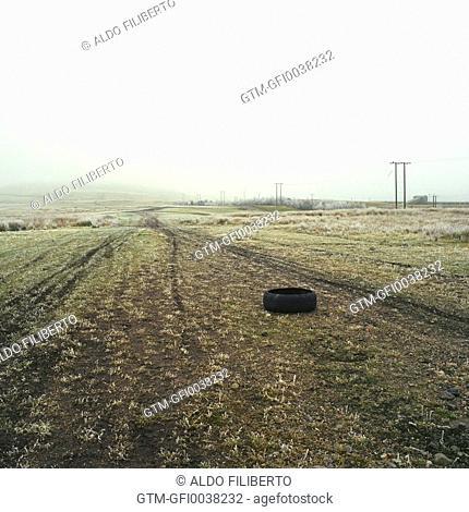 Tyre in Field