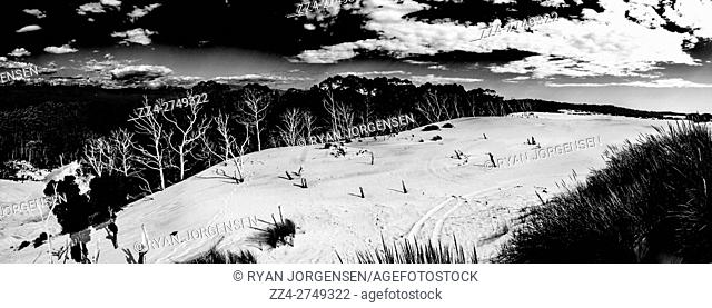 Black and white panoramic landscape of the largest dune field in Tasmania, located north of Strahan on the West Coast. Henty Dunes