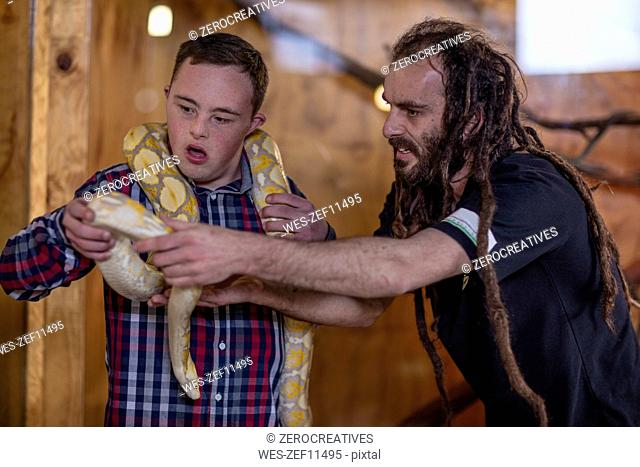 Animal attendant handing over albino python snake to young man with down syndrome
