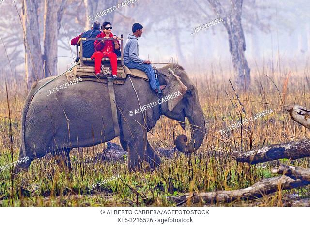 Elephant Safari, Domestic Elephant, Grasslands and Forest, Royal Bardia National Park, Bardiya National Park, Nepal, Asia