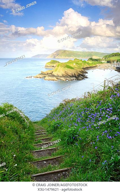 Spring flowers on Widmouth Head overlooking Sextons Burrow and Watermouth near Ilfracombe and Coombe Martin, Devon, England, United Kingdom