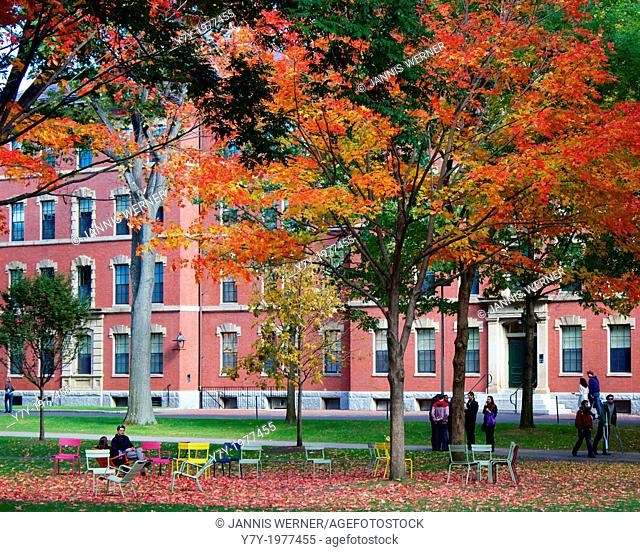 Colorful fall foliage in Harvard Yard, the old heart of the campus of Harvard University in Cambridge, MA, USA