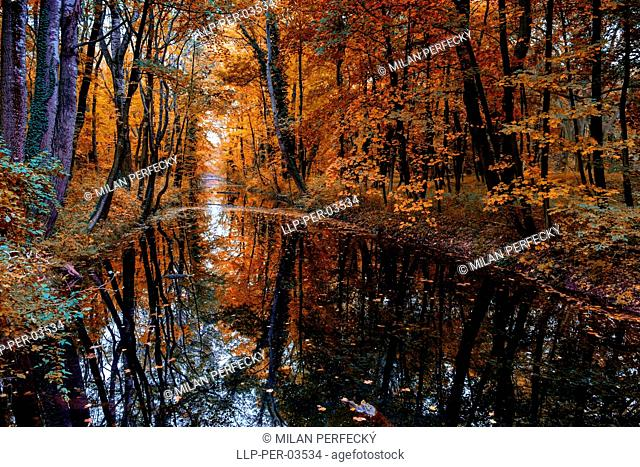 Water meadow - Rusovce - Bratislava - Slovakia