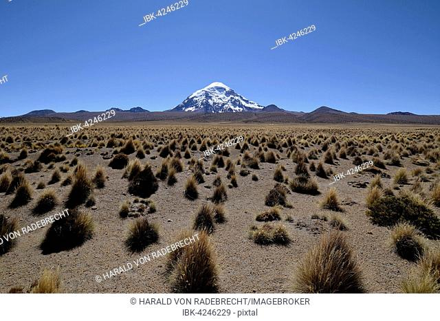 Salaam volcano with ichu grass (Stipa ichu) in Sajama National Park, Altiplano, border to Bolivia, Chile