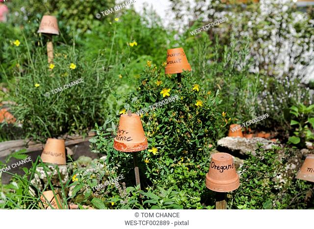 Germany, Flower pots on wooden sticks showing names of herbs