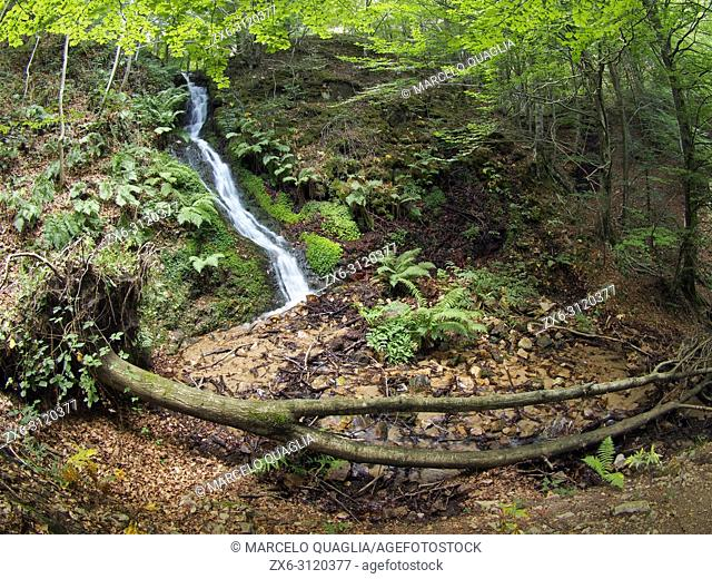 Beech forest (Fagus sylvatica) and Marianegre stream waterfalls. One of the several subsequent cascades along the stream