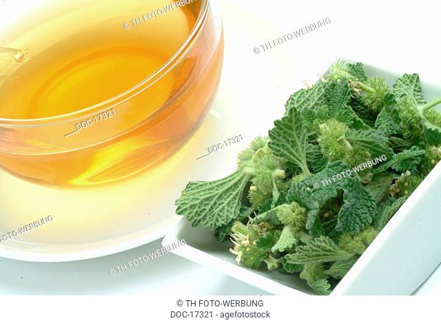 tea mad of white horehound - medicinal plant - herb - Marrubium vulgare - Marrubio comune - te