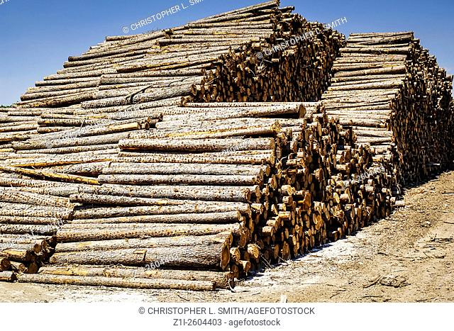 Rows of stacked logs at a logging sawmill in Wisconsin WI
