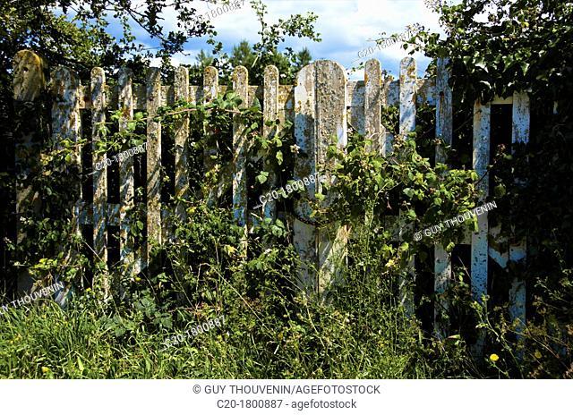Garden gate, Cotentin, Normandy, France