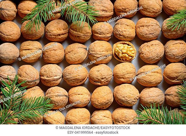 One opened walnut among rows walnuts background