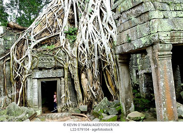 Ta Prohm temple, mid XIIth century, early XIIIth century AD. Buddhist. Temples of Angkor. Siem Reap area. Kingdom of Cambodia