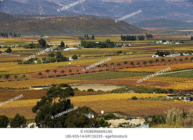 Autumn Winelands Landscapes at the Hex River Valley in the Western Cape