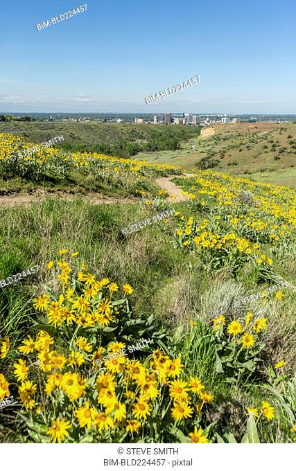 Yellow flowers and dirt path in rolling landscape near city