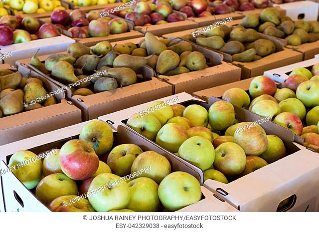 Apple flats in variety for sale at Detering Organic Farm near Eugene Oregon during the Fall