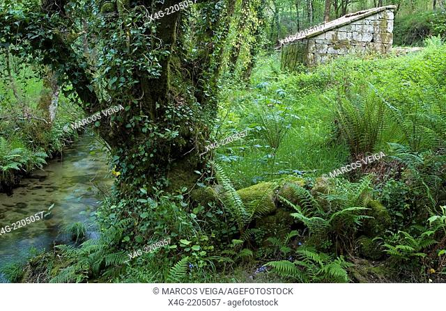 River Barragan, forest and mill
