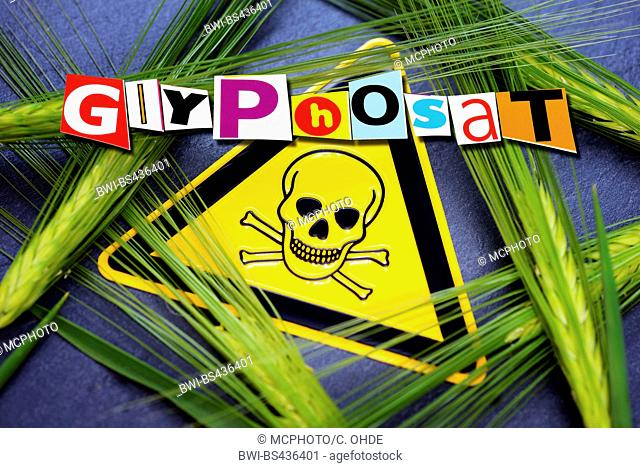 common barley, six-rowed barley (Hordeum vulgare), barley and warning sign, use of herbizid glyphosat in agricultural economy, Germany