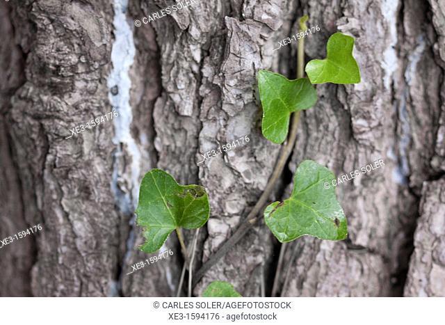 Plant climbing the tree