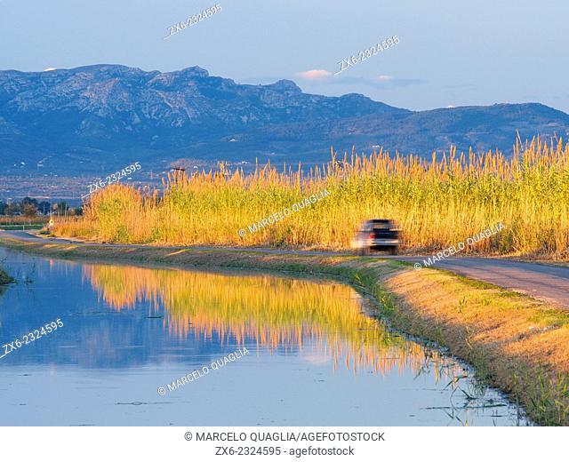 Autumn sunset lit Giant Reeds (Arundo donax) alongside Lala drainage channel, Els Ports Mountain Range as background. Ebro River Delta Natural Park