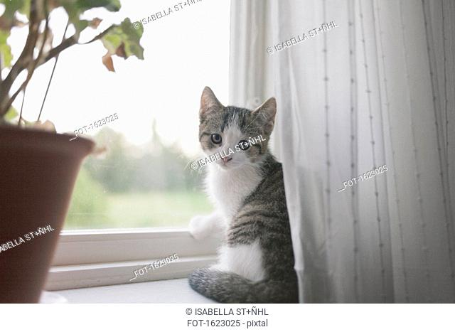 Portrait of cat sitting on window sill