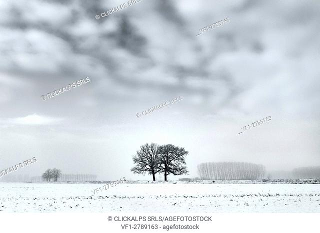 Plain Piedmont, Piedmont,Turin, Italy. Trees in the mist