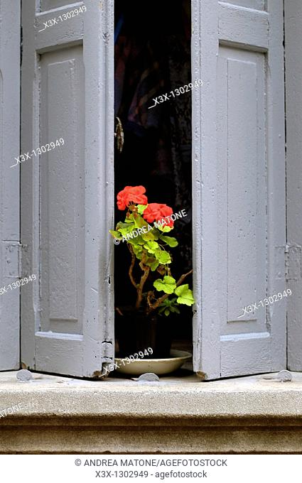 Red geranium flowers on a window pane