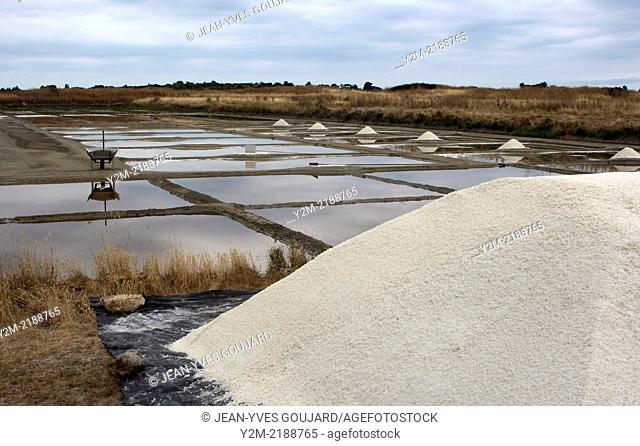 Harvesting sea salt, Noirmoutier island in France