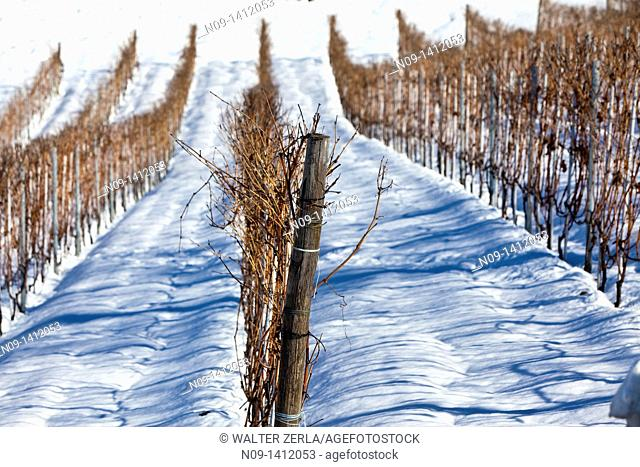 Barolo wineyards, Langhe, Piedmont, Italy