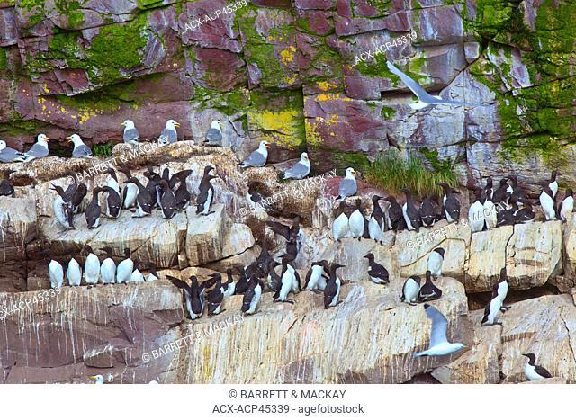Fossils, Mistaken Point Ecological Reserve, Avalon Peninsula, Newfoundland and Labrador, Canada