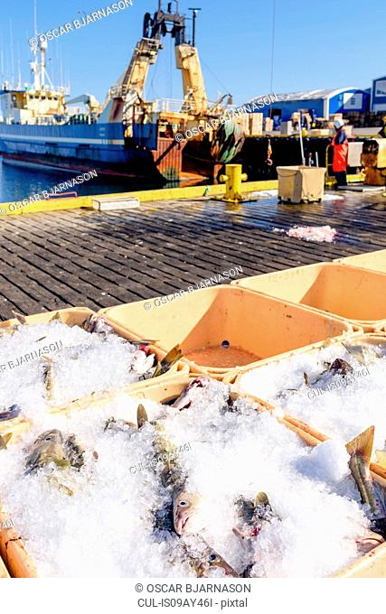 Crates with fresh fish and ice in harbour, Grindavik, Iceland