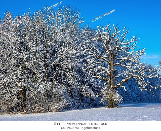Snow covered landscape in winter, Bavaria, Germany, Europe