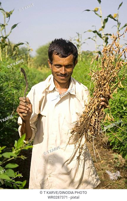Farm male labourer working in Soya bin crop farm Beed , Maharashtra , India MR688D