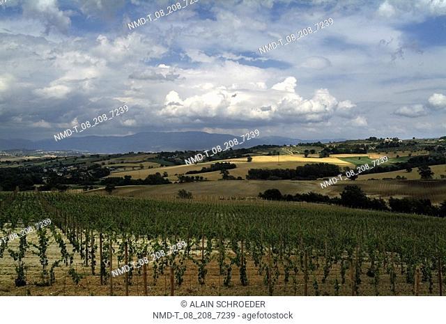 Crops in a field, Duesanti, Todi, Umbria, Italy