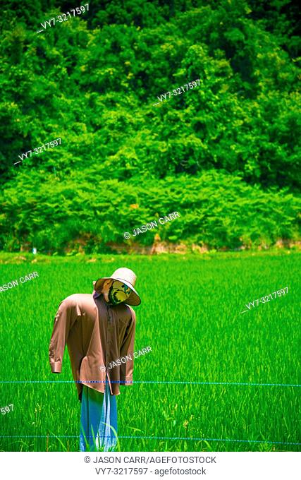 Rice Field in Toyama, Japan. Japan is a country located in the East Asia