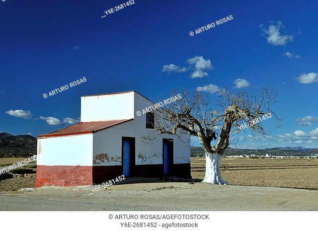 Tree and little house in the Delta of Ebro (Tarragona, Catalonia), Spain
