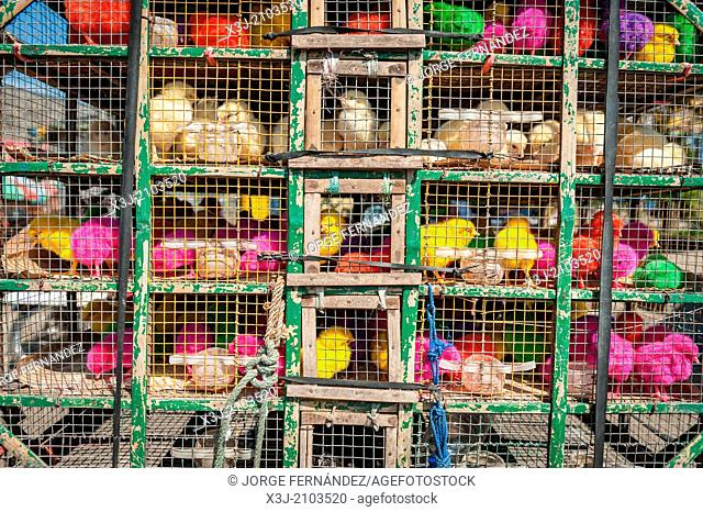 Cages of litle coloured chickens ready for sell, Yogyakarta, Indonesia, Asia