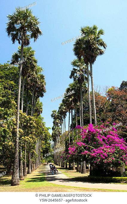 Avenue of palms at the Peradeniya Royal Botanical Gardens, Sri Lanka
